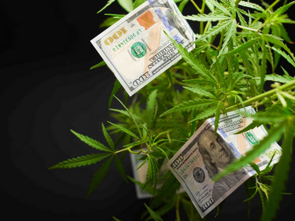 cannabis income