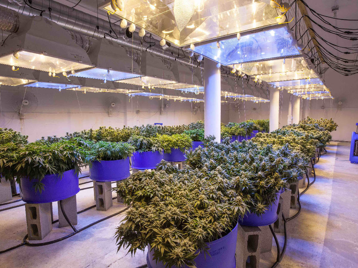 top-tips-to-keep-your-grow-op-being-shuttered-by-cannabis-inspector