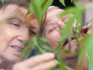Tips-for-Starting-to-use-Marijuana