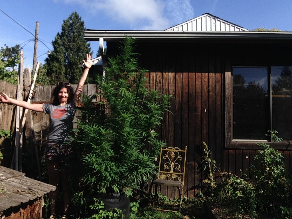 Liz Crain's home grown cannabis