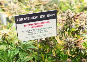 Home-grow cannabis laws