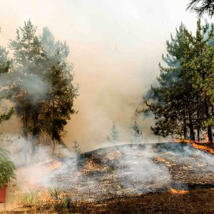 California wildfires and cannabis