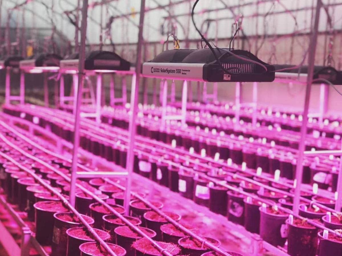 HID vs. LED grow lights