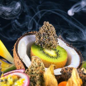 cannabis terpenoids