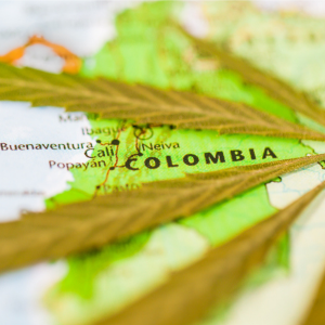 Colombian cannabis