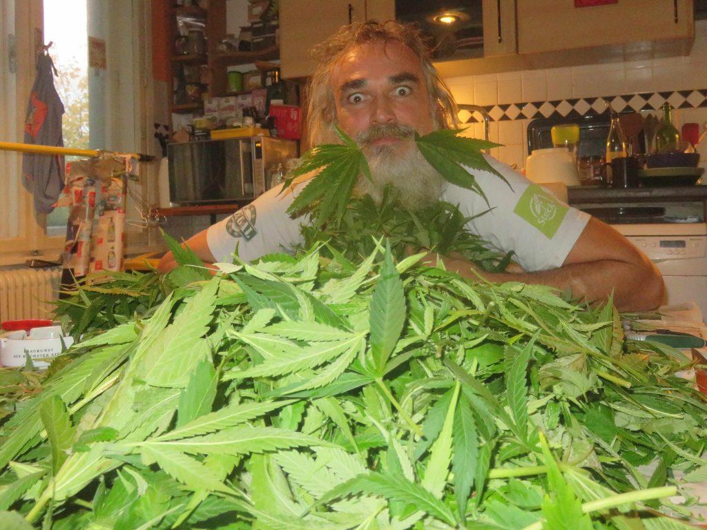 Austria cannabis ban