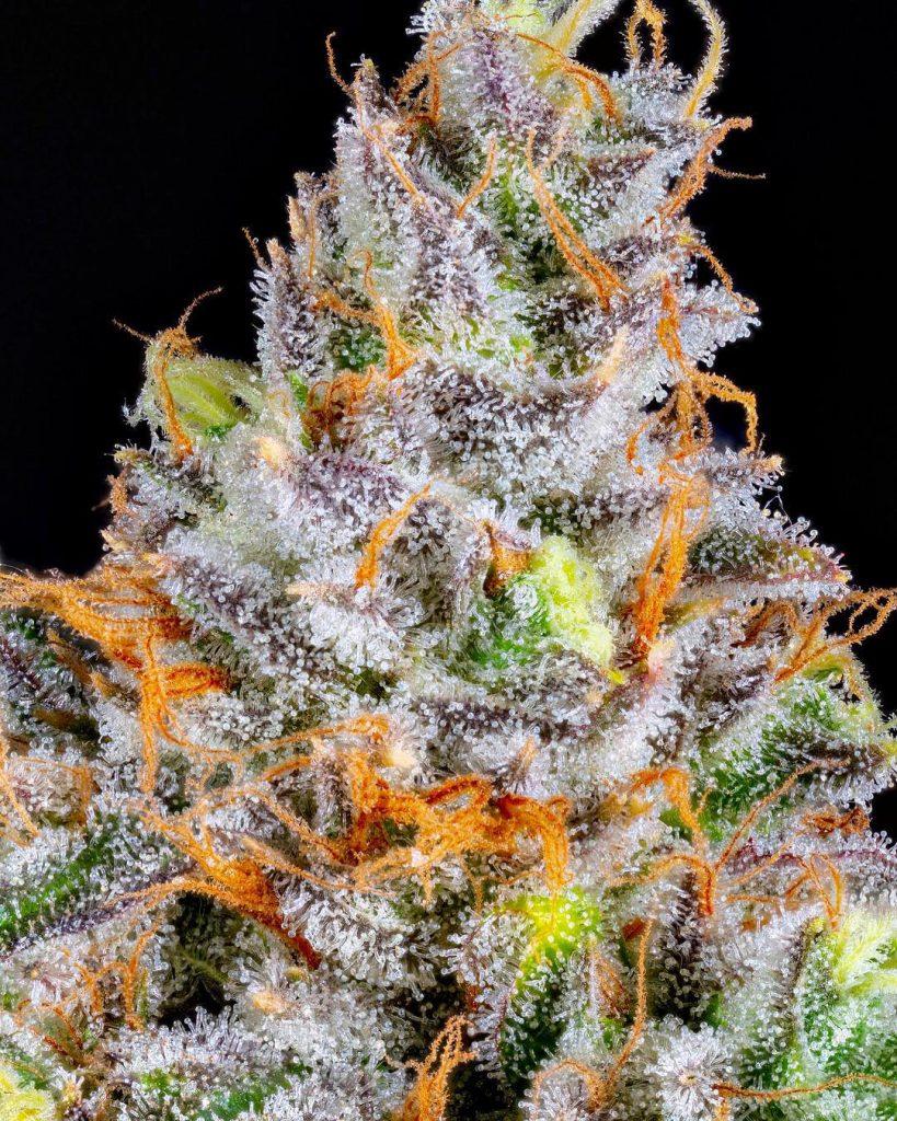 best cannabis flavors