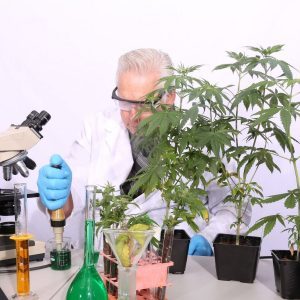 cannabis medical studies