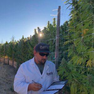 Humboldt cannabis