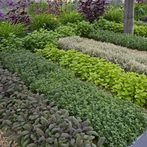Cannabis Herbs Garden