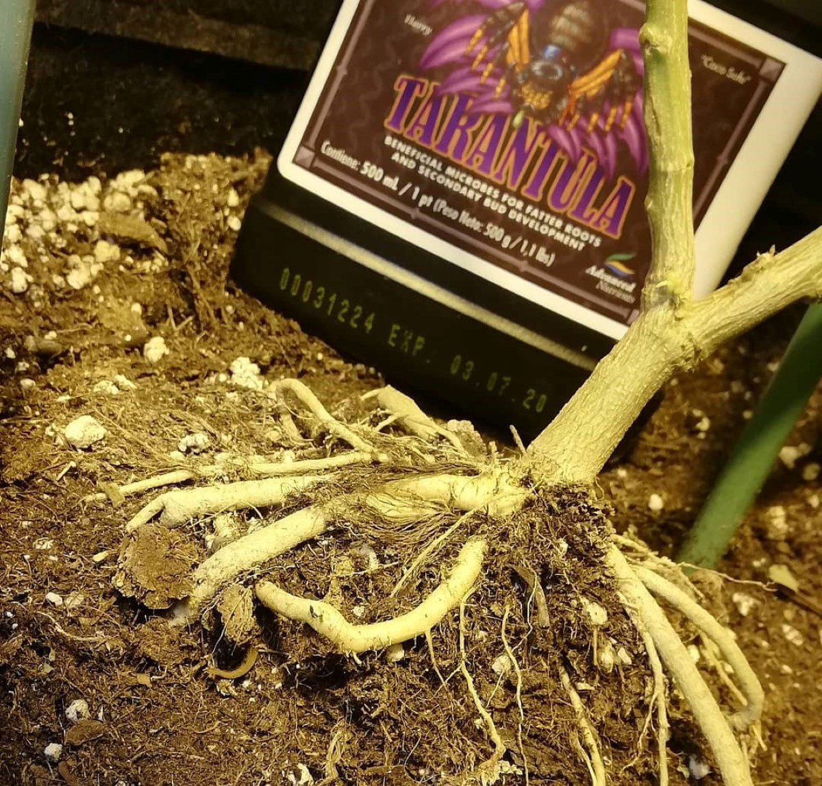 Advanced Nutrients Tarantula and Cannabis Plants Roots