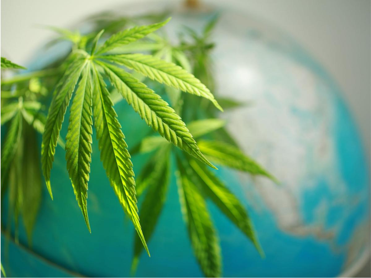 cannabis environment