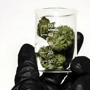 Why Dutch Cannabis Pioneer Won't Move Into Recreational