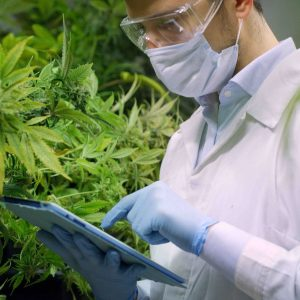 lawmakers-seek-to-protect-universities-that-study-cannabis