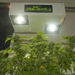 New Hydroponics Grow Lights Increase THC in Your Medical Marijuana