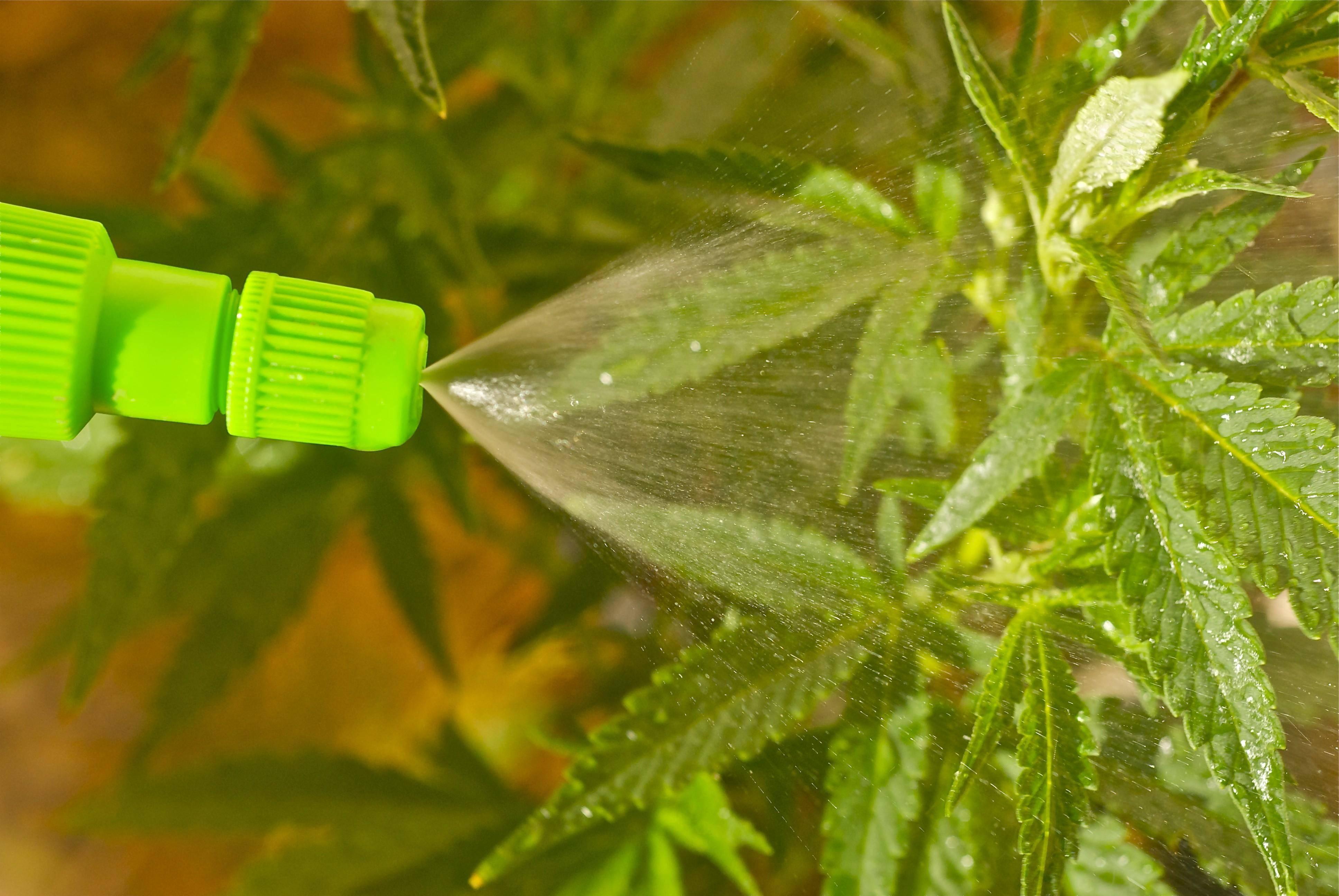 Нужно поливать коноплю о марихуане журнал