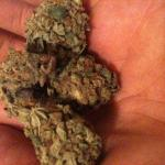 Medicinal Cannabis Strain Review – Beechwood Purple