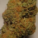 medical cannabis strain bluedream