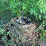 Protect Your Outdoor Marijuana Roots From Heat