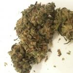 Medicinal Cannabis Strain Review – Charlie Sheen