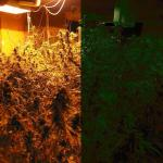 Save On Winter Heating Bills For Your Medical Marijuana Garden With Duel Blooming Rooms