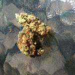 Medicinal Cannabis Strain Review – Dr. Manhattan