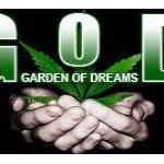 Mini Medical Marijuana Soil Beds That Rock