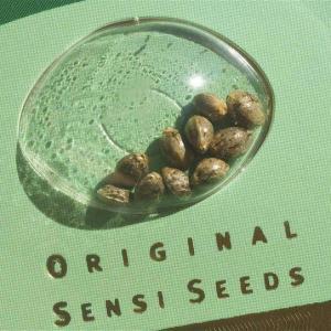 Original Sensi Seeds