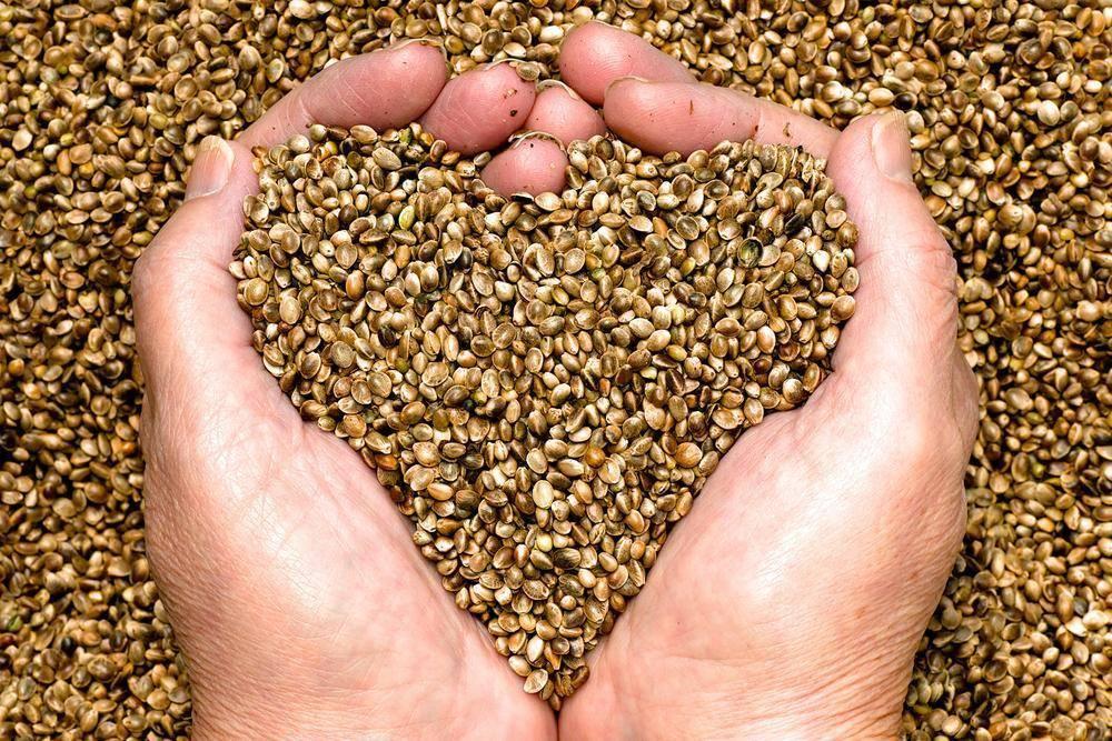 hemp seed heart