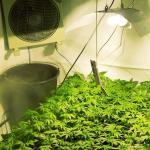Choose The Hydroponic Lighting System That Is Right For You