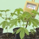 Master Your Hydroponic Marijuana Garden With Controllers