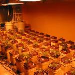 Hydroponic Marijuana Growing Mediums Pros & Cons