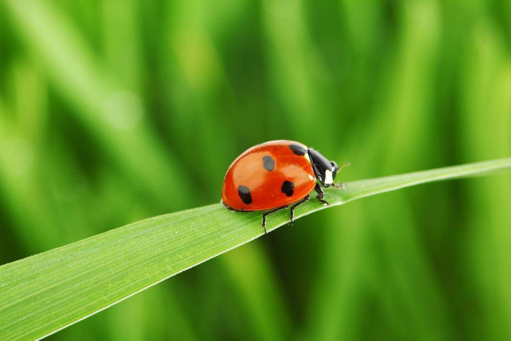 ladybug_0