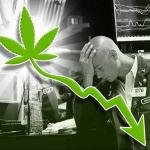 From Wall Street To The Grow Room: Legal Marijuana Business Ideas