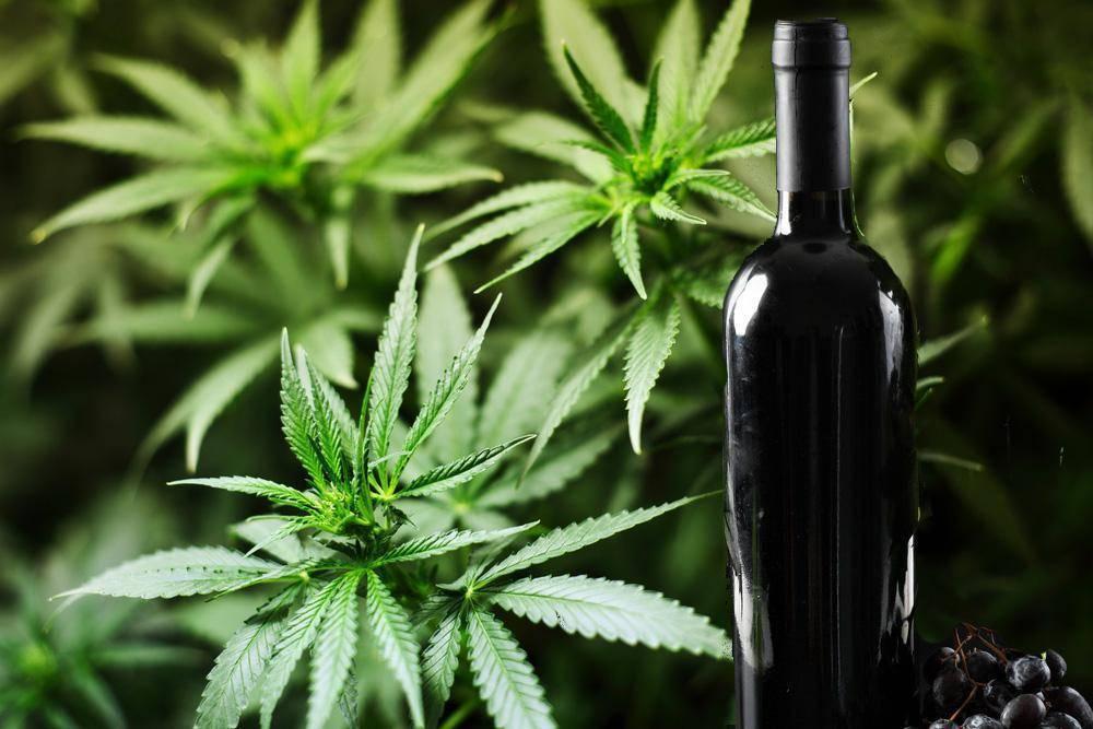 marijuana-wine