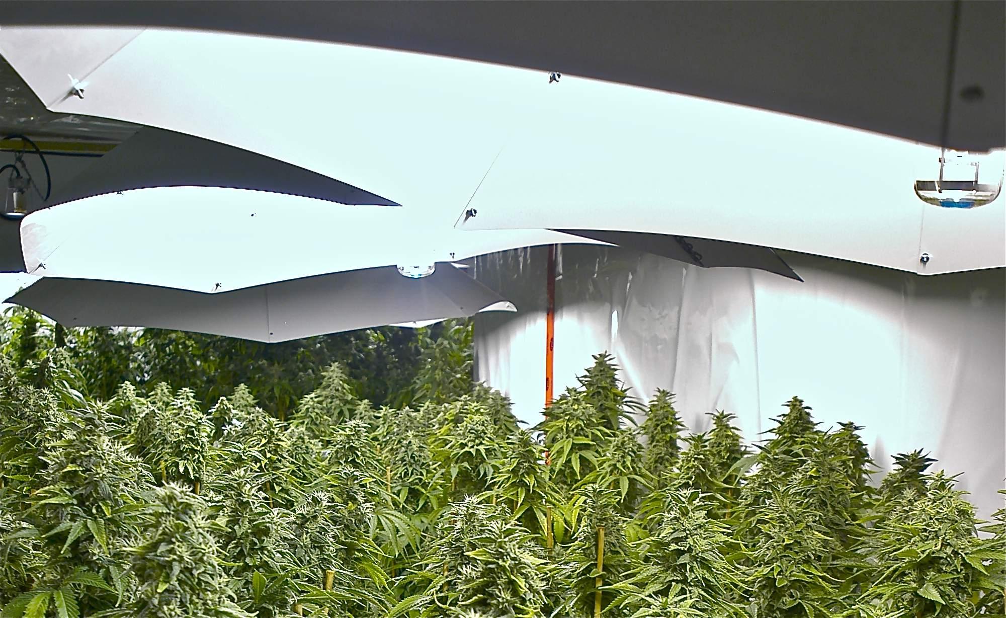 marijuana_hydroponics