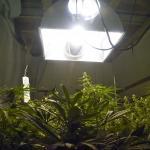Hydroponics Lighting Gear for Higher-THC Medical Marijuana