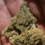 Medicinal Cannabis Strain Review – Narnia