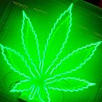 green cannabis leaf light