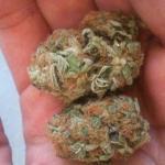 Medicinal Cannabis Strain Review – Kryptonite