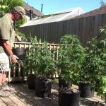 Pot On The Patio 1: Brown Dirt Warrior's Guide To Breeding, Feeding, and Record Keeping (Plus Charlie's Amazing Marijuana Garden)