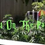 Pot On the Patio 2: Insider Tips And Tricks For Successful Growing