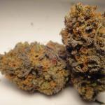 Medicinal Cannabis Strain Review – Purple Cherry Pie