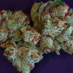 Rare Dankness Marijuana Seeds: High Times Cannabis Cup Winners 4 Good Reason!