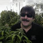 Urban Grower: Medical Marijuana Heart of Gold
