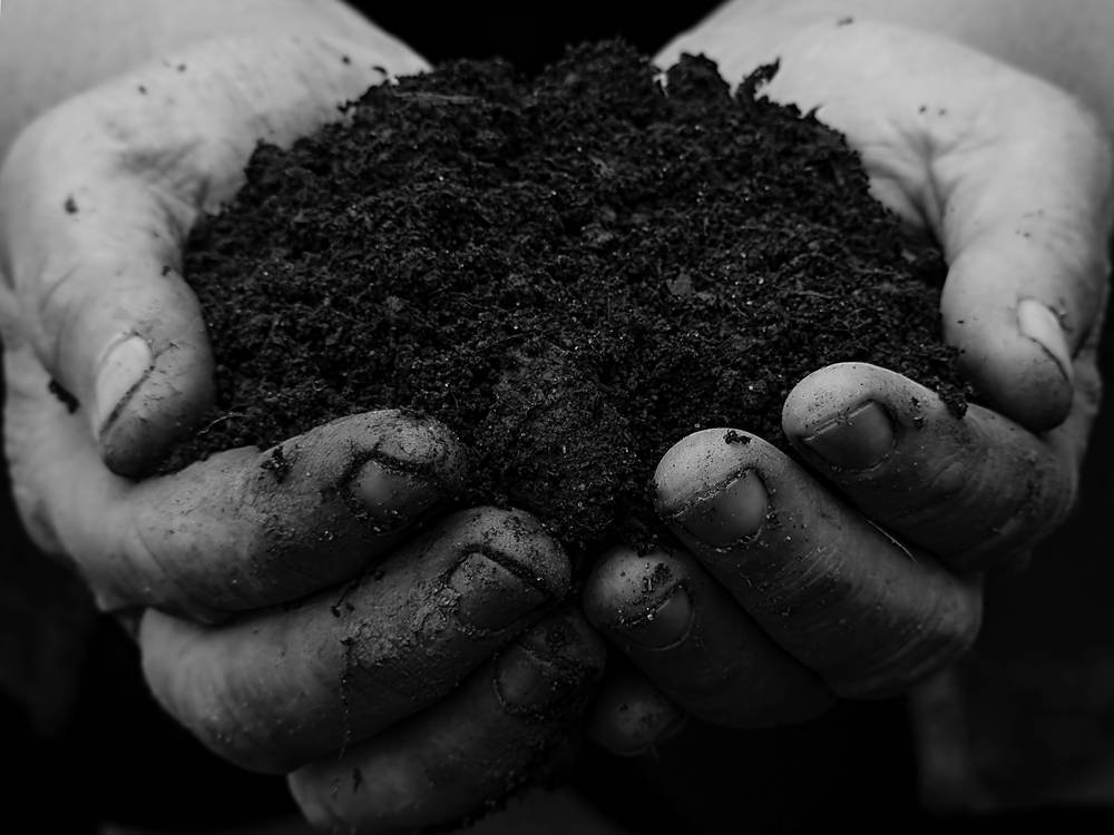 handful of organic soil