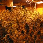 5 Critical Rules For New Indoor Marijuana Growers