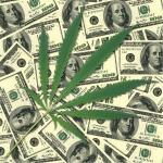 Weed Experts Wanted In Washington