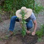 Are You a Good or Poor Marijuana Grower? The Brown Dirt Warrior Will Tell You