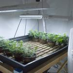 Marijuana Grow Room Lighting & Ventilation